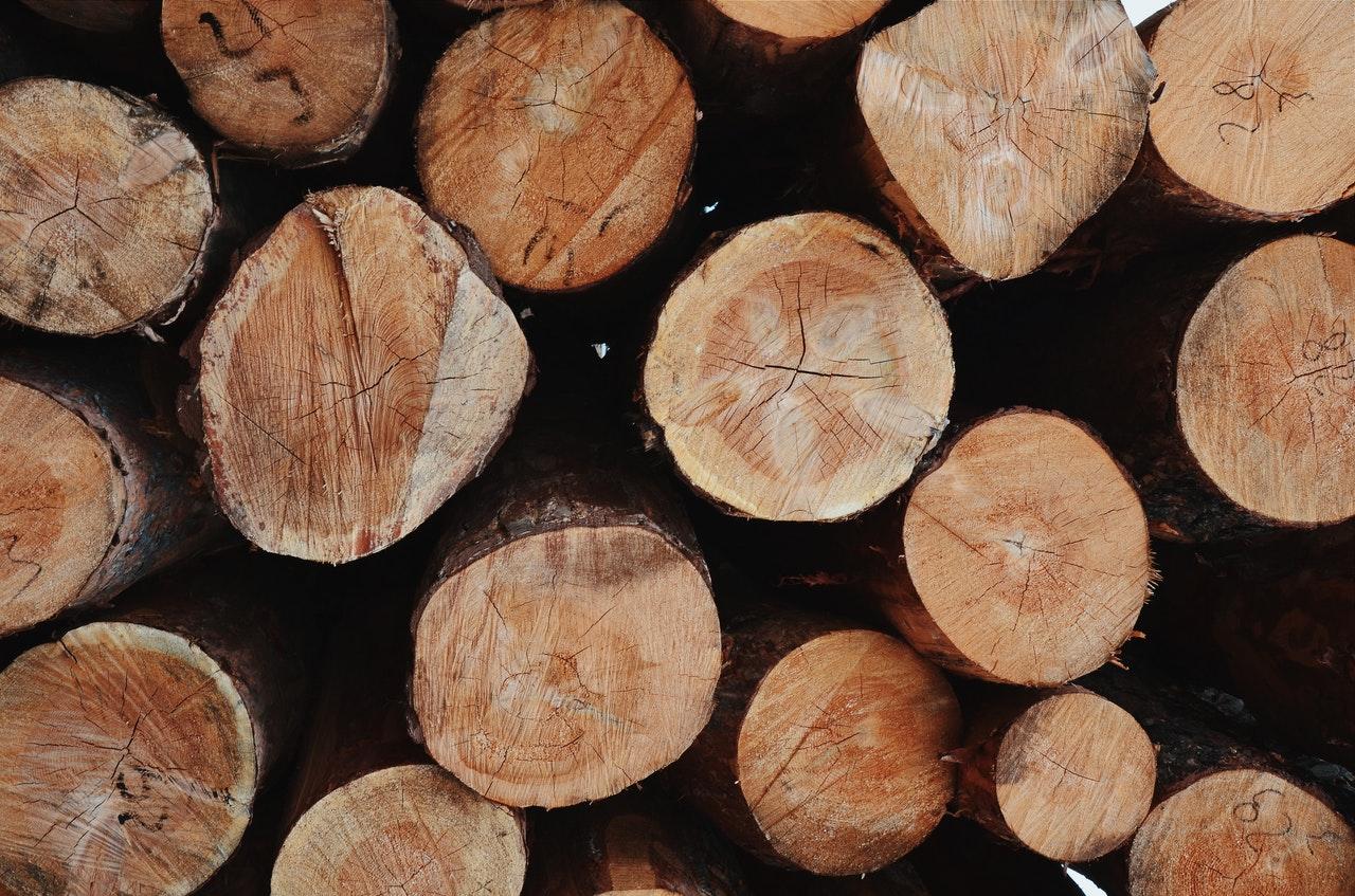 Житель Марий Эл организовал незаконную рубку леса почти на два млн рублей