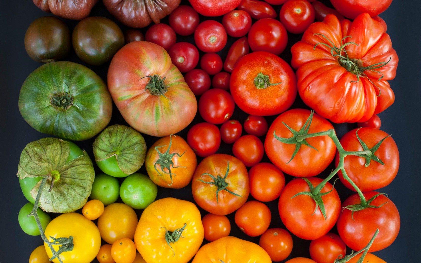 Садоводам РФ дали советы по поливу и подкормке помидоров в августе