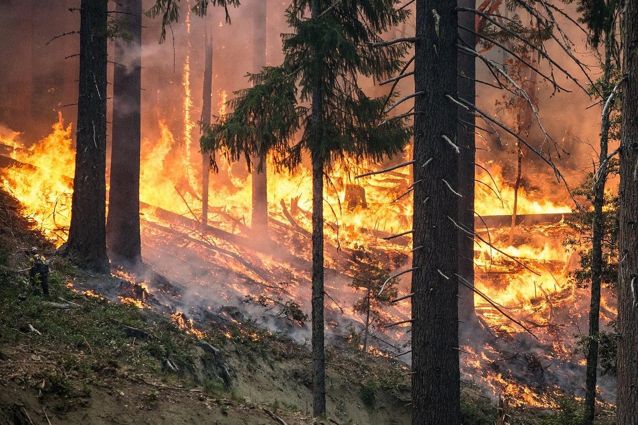 В лесах Марий Эл с начала пожароопасного сезона произошло 40 пожаров