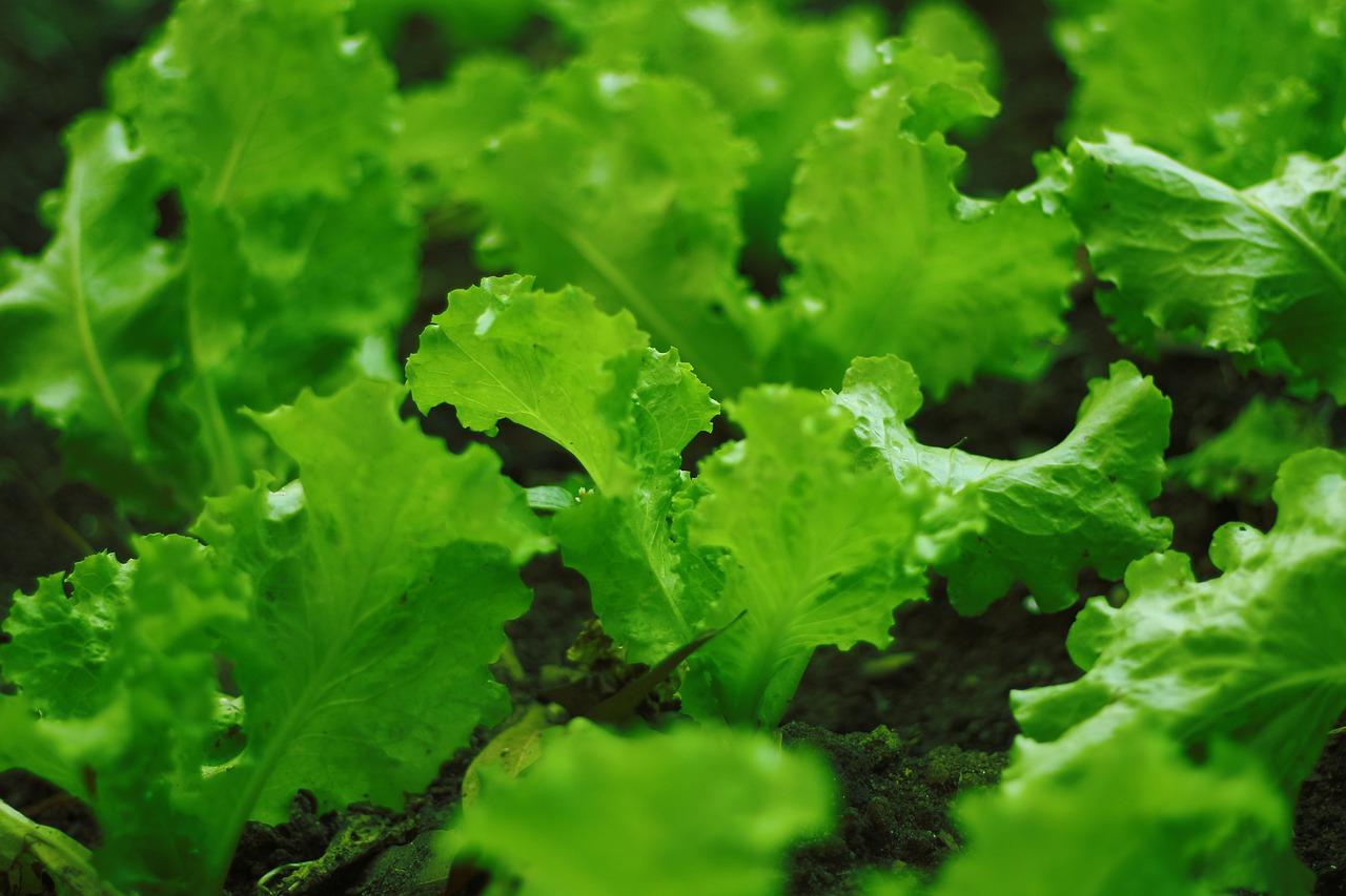 Перечислен топ-7 овощей и трав для посадки на дачном огороде в августе