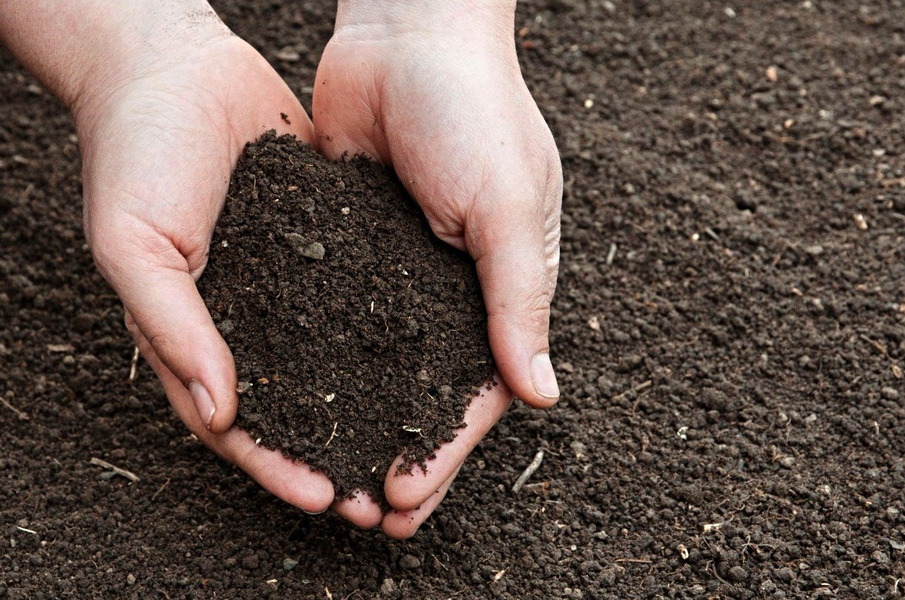 Ученые ЮФУ заявили о свойстве меди снижать активность микроорганизмов и портить почву