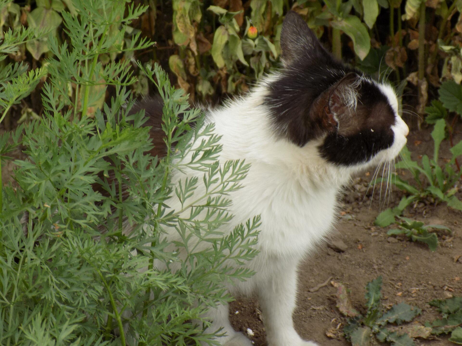 Ветеринар Лесли Лайонс обнаружил 95% генетическое сходство у человека и кошки