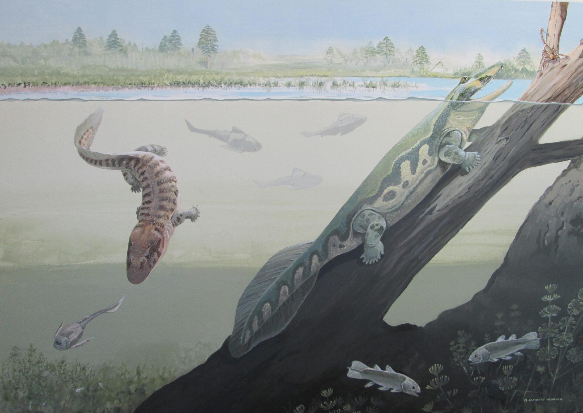 Первые наземные четвероногие появились на Земле почти 400 млн лет назад