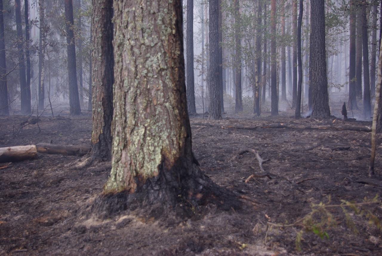 В Марий Эл активно продолжает гореть 47 гектаров леса