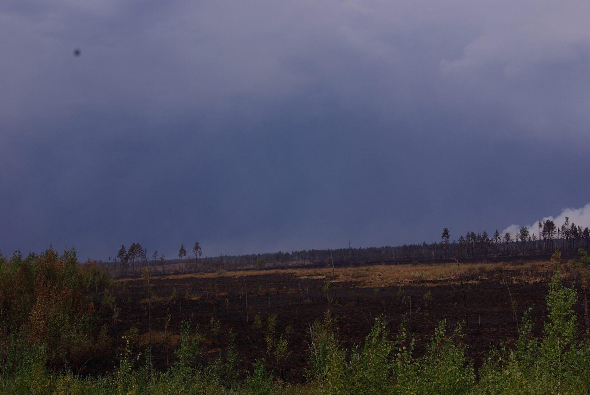 Борьба с пожарами в Марий Эл: данные на утро 31 августа