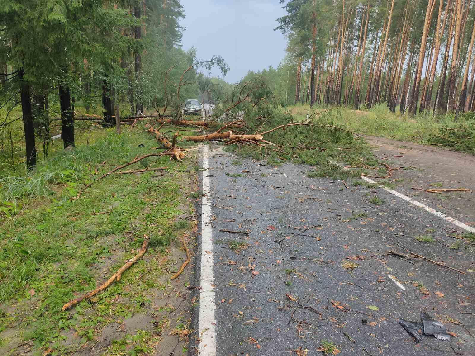 В Марий Эл спасатели освободили от упавших деревьев авто и расчистили дорогу