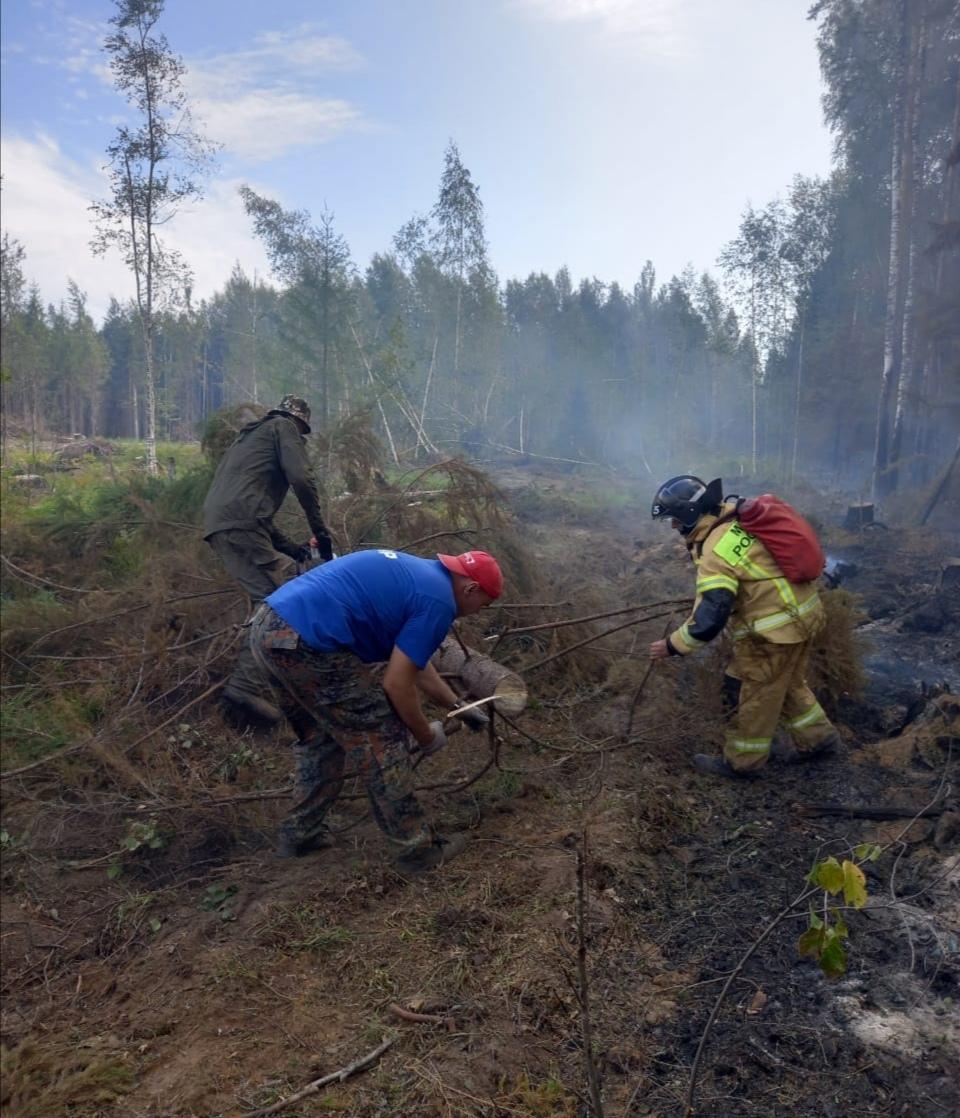 В Марий Эл локализовали лесной пожар