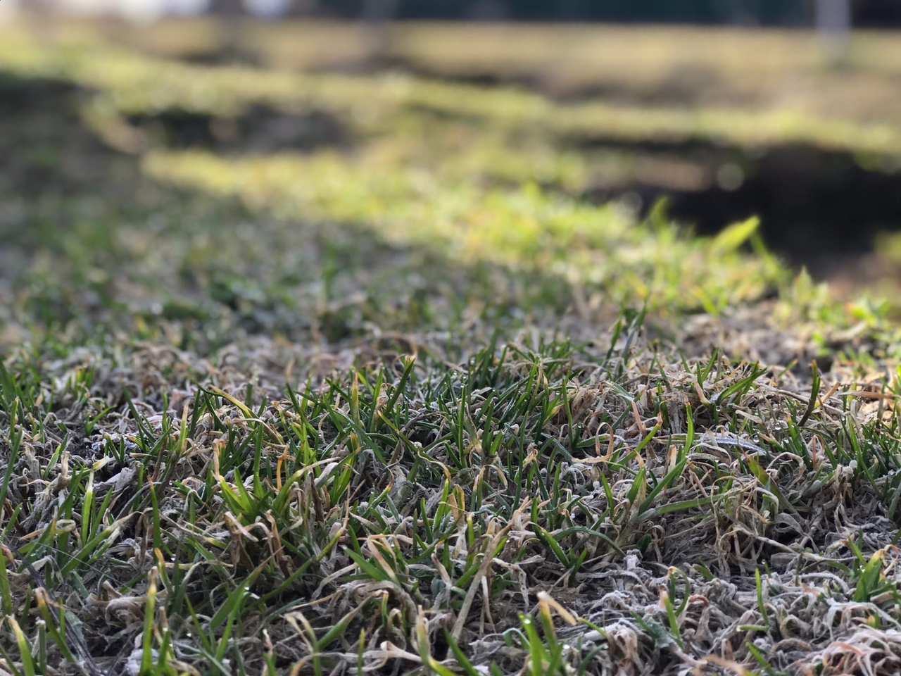 В ночь с 29 на 30 августа в Марий Эл местами ожидаются заморозки