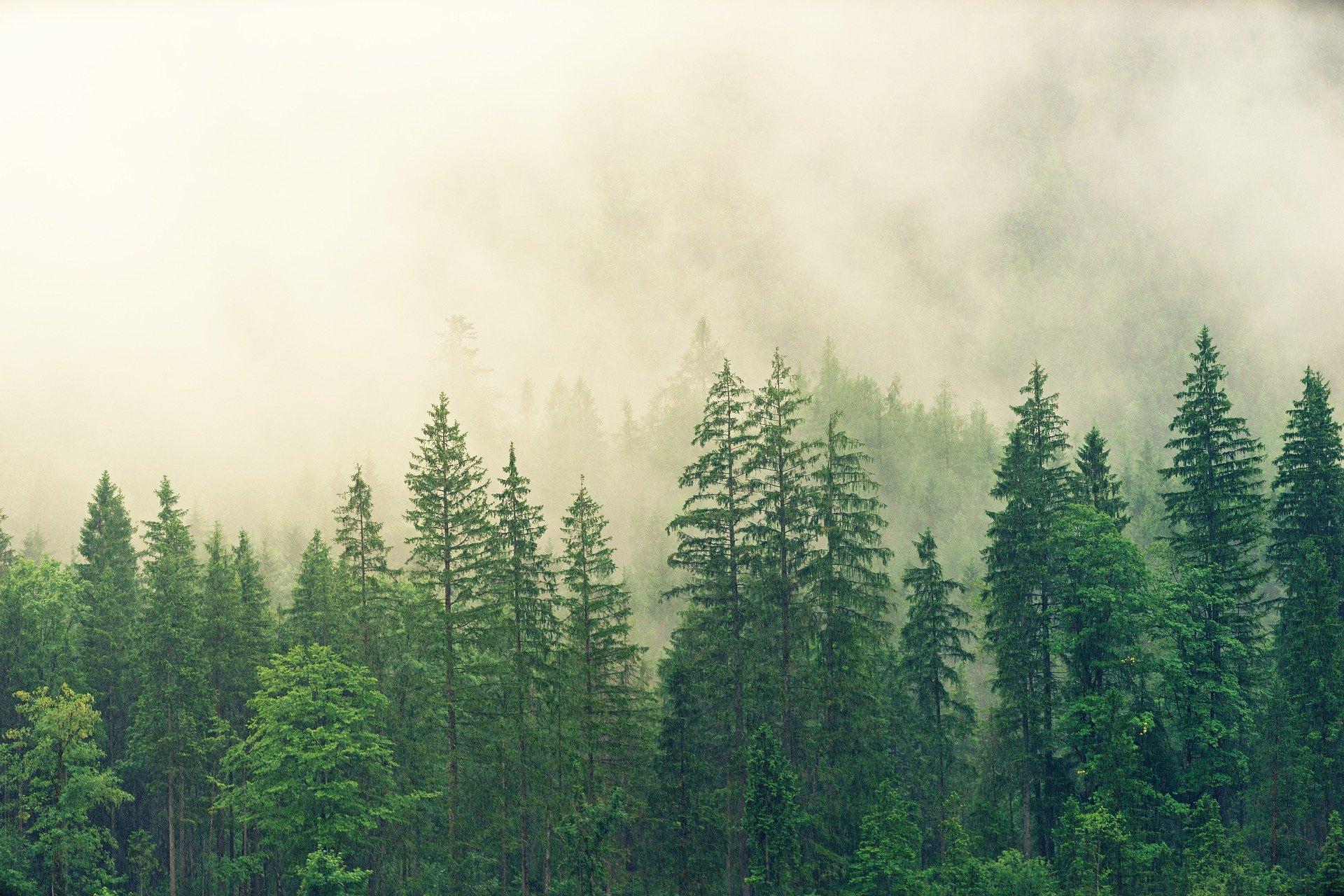 Леса планеты снижают температуру на Земле на 15%