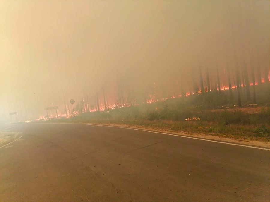 В Марий Эл площадь лесного пожара возросла до 700 га