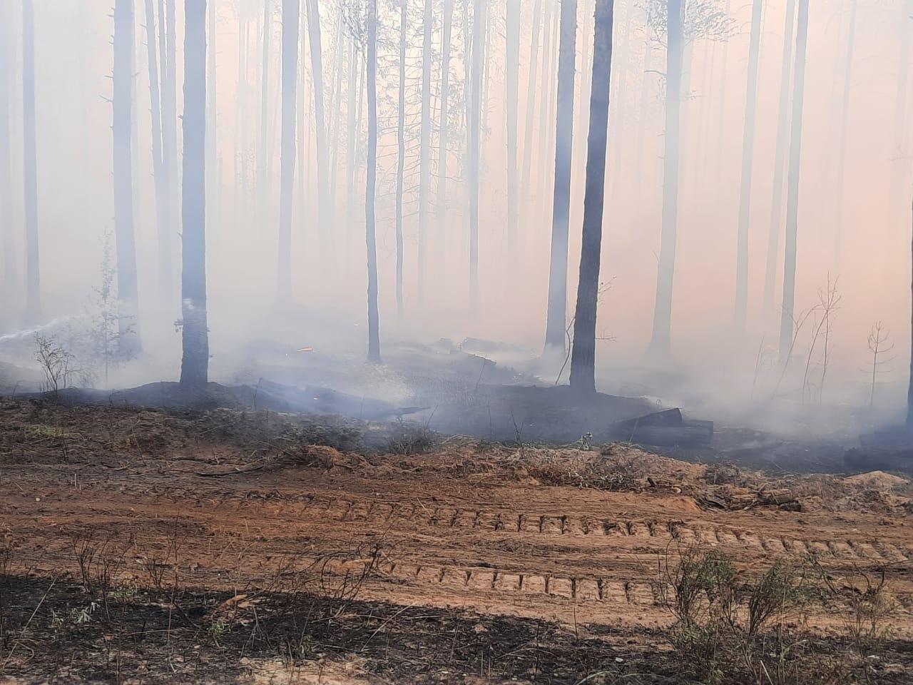 В Марий Эл из-за лесного пожара эвакуируют поселок