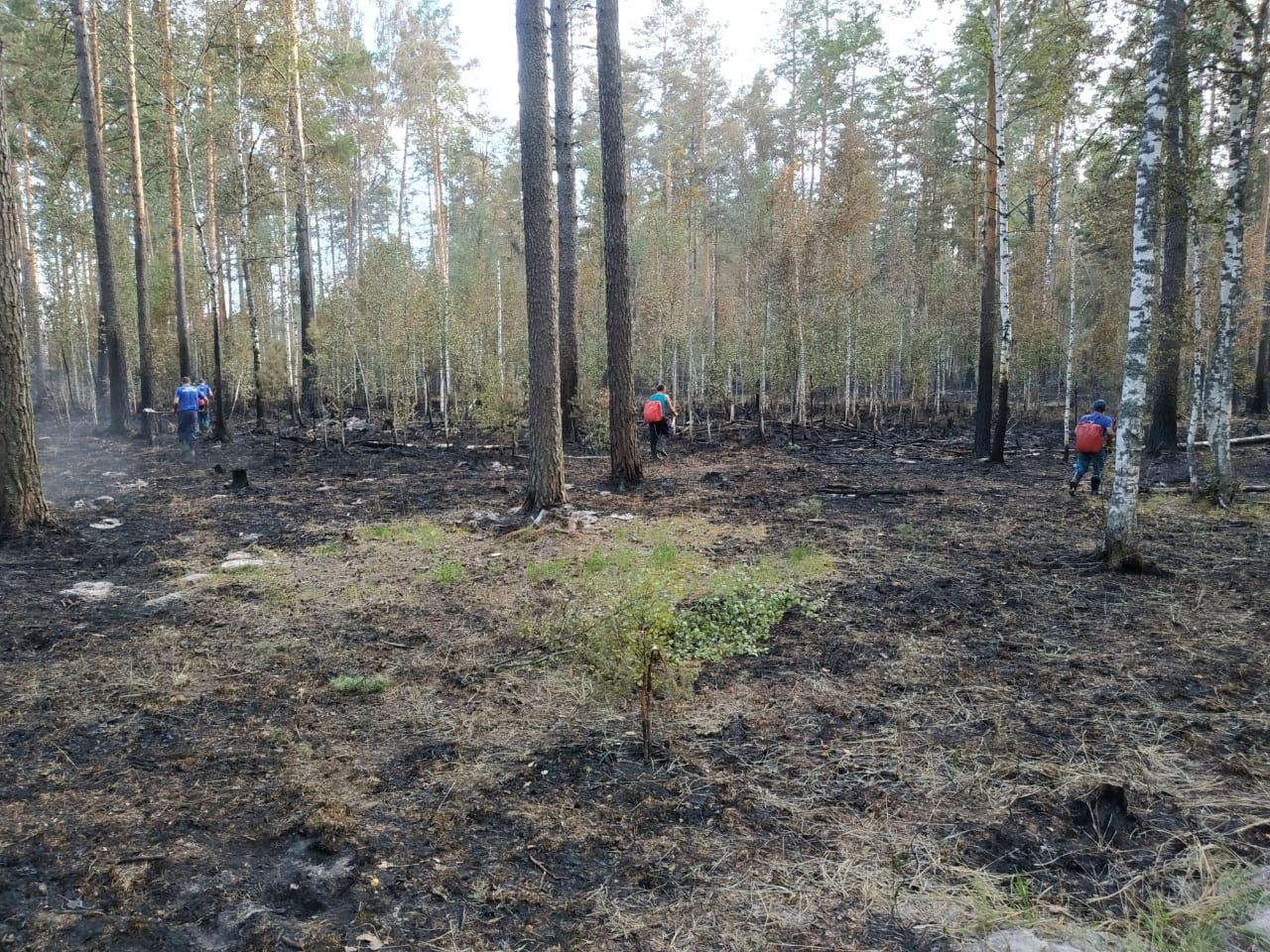 В Марий Эл площадь тления лесного пожара составляет 16 гектаров