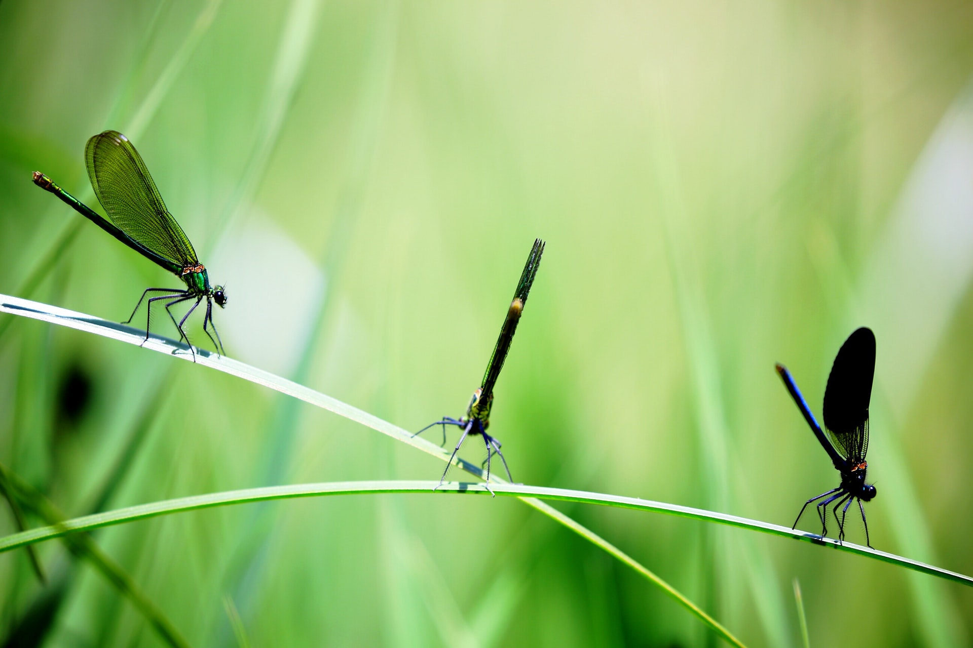 Обоняние насекомых планируют использовать для создания лекарств