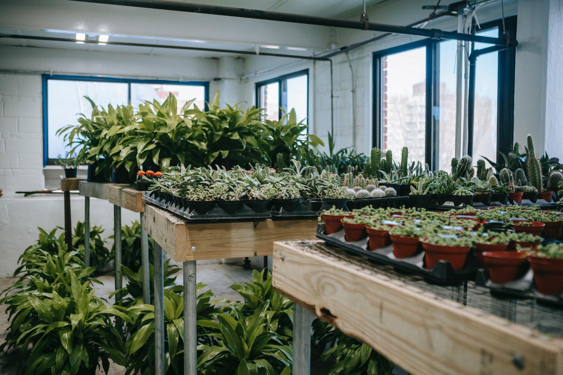 Создан новый метод наблюдения за движением воды внутри растений
