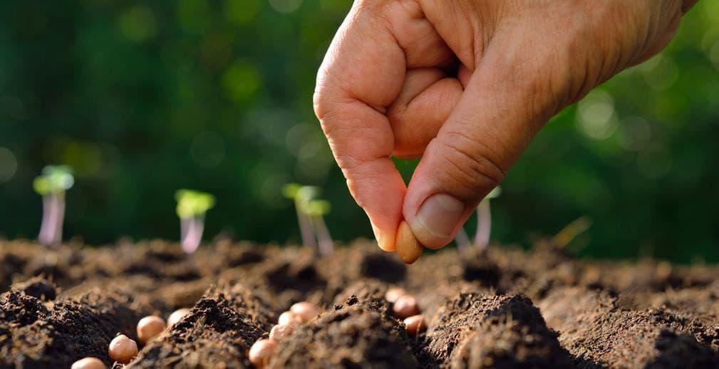Проект «Иннагро» приглашает фермеров к участию в испытаниях биопрепаратов через Своё Фермерство