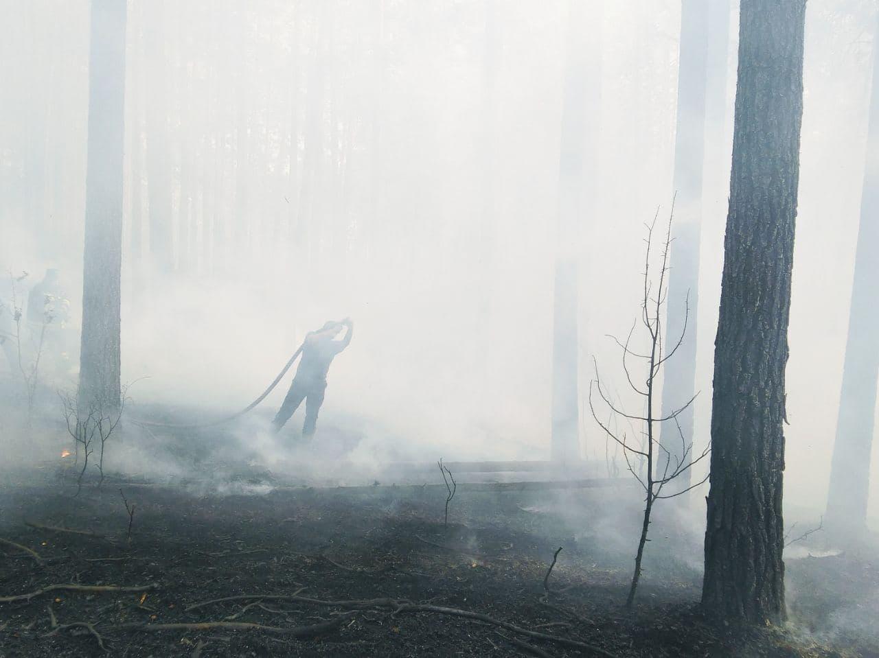 Опубликованы кадры борьбы с лесным пожаром в Марий Эл глазами добровольцев
