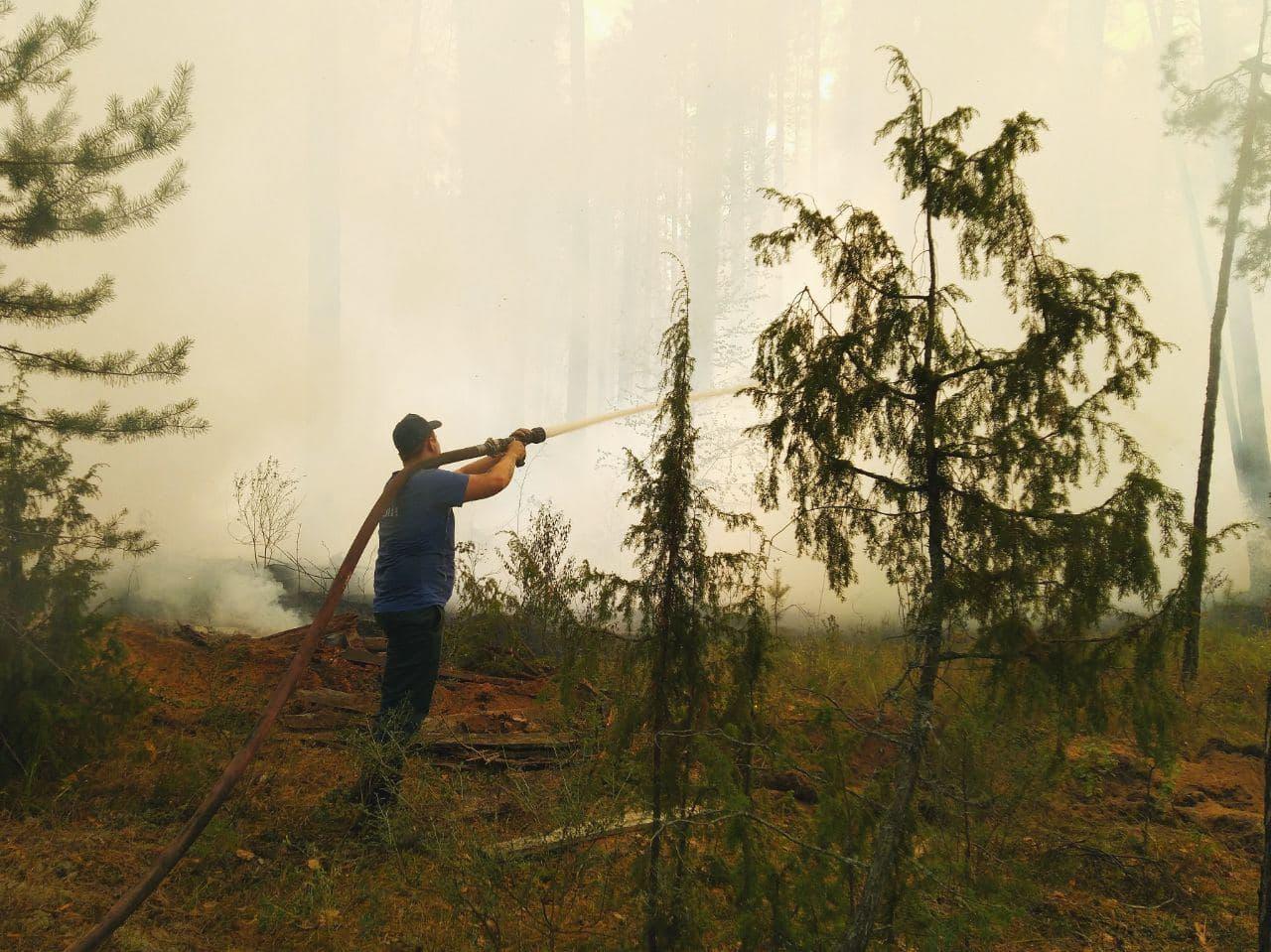 Минприроды Марий Эл получит 11,5 миллионов рублей на предупреждение лесных пожаров
