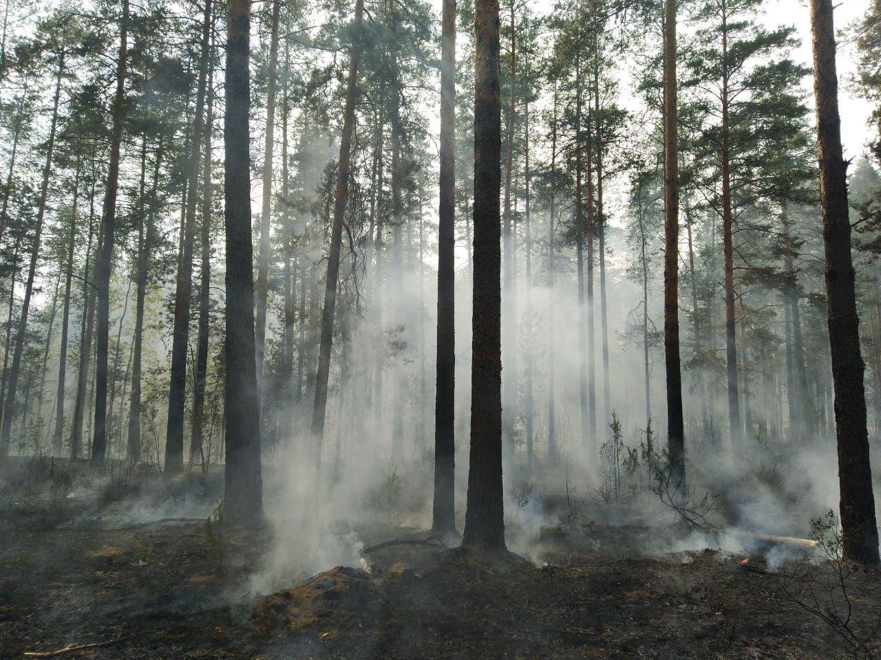 В лесах Марий Эл полностью  ликвидировали крупный природный пожар
