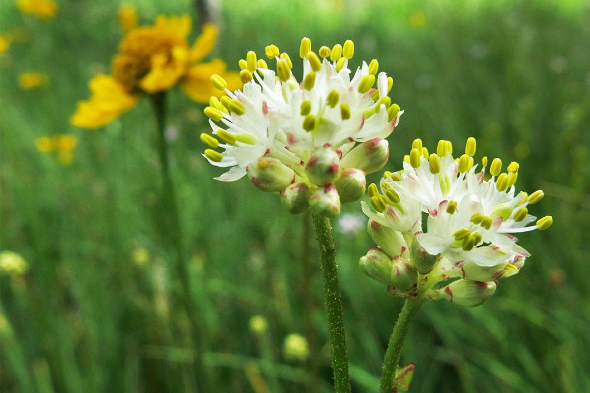 В Канаде открыт ранее неизвестный вид плотоядных растений