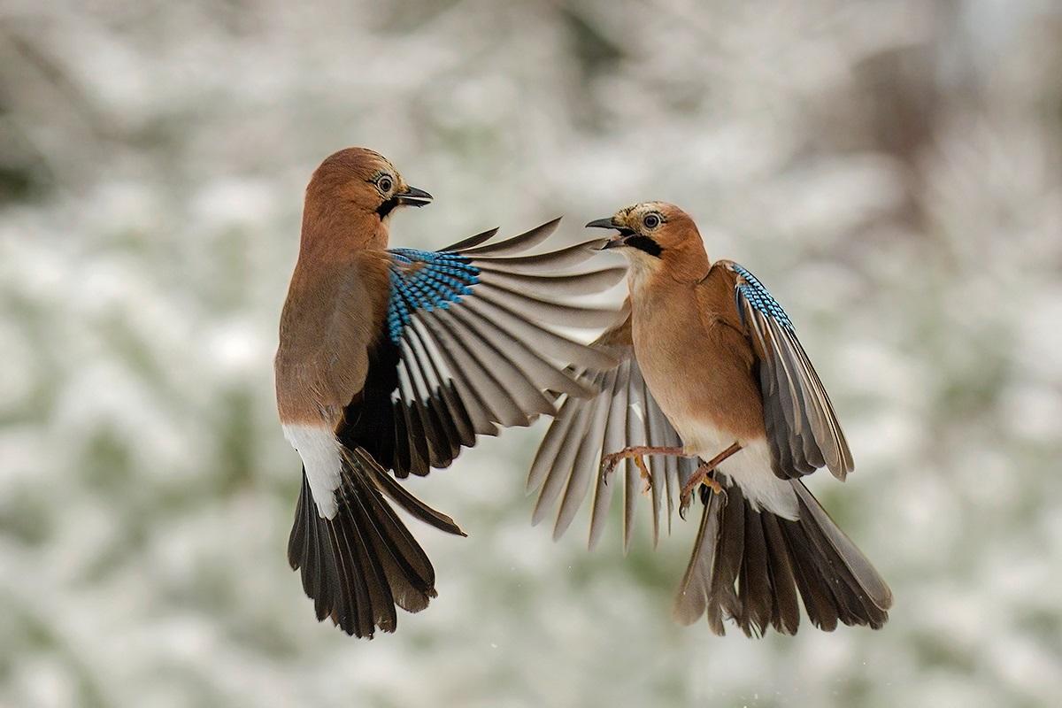 Распределение птиц в городах изменилось из-за пандемии