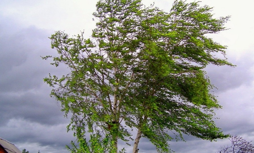 В ближайшие часы в Йошкар-Оле ожидается усиление порывов ветра