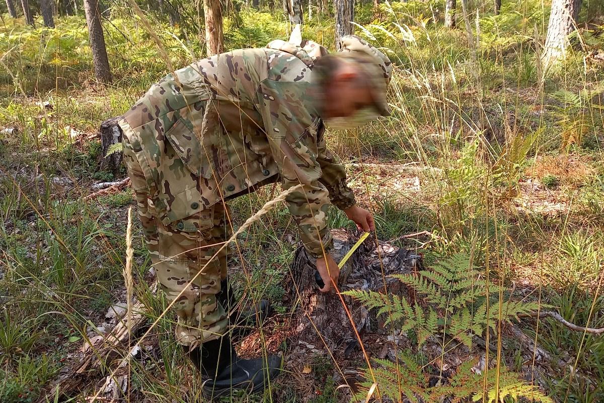 В Марий Эл состоится суд над похитителями леса