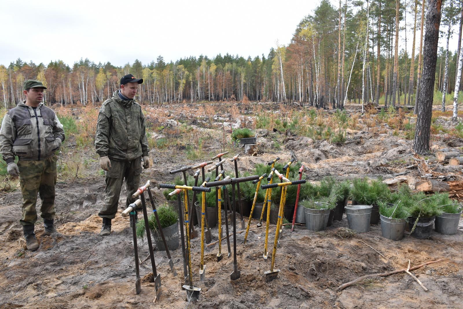 В первый день акции «Сохраним лес» в Марий Эл высадили 30 тыс. сеянцев сосны