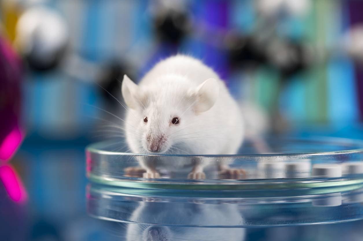 Смесь иммунотерапии и вакцины от рака помогла у мышей излечить меланому