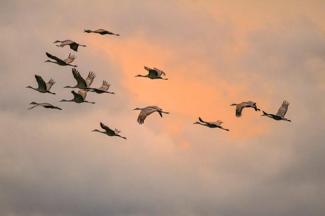 Мигрирующие наземные птицы во время полётов над морем прокладывают безопасные маршруты