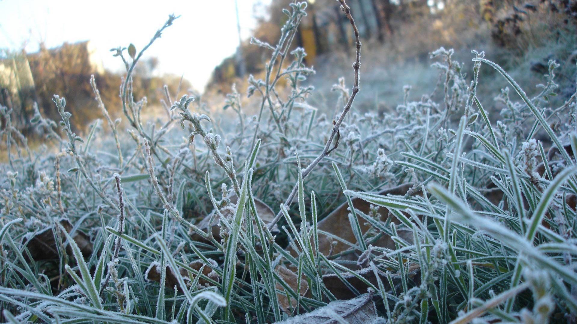 В Марий Эл в ночь на седьмое сентября ожидаются заморозки на почве
