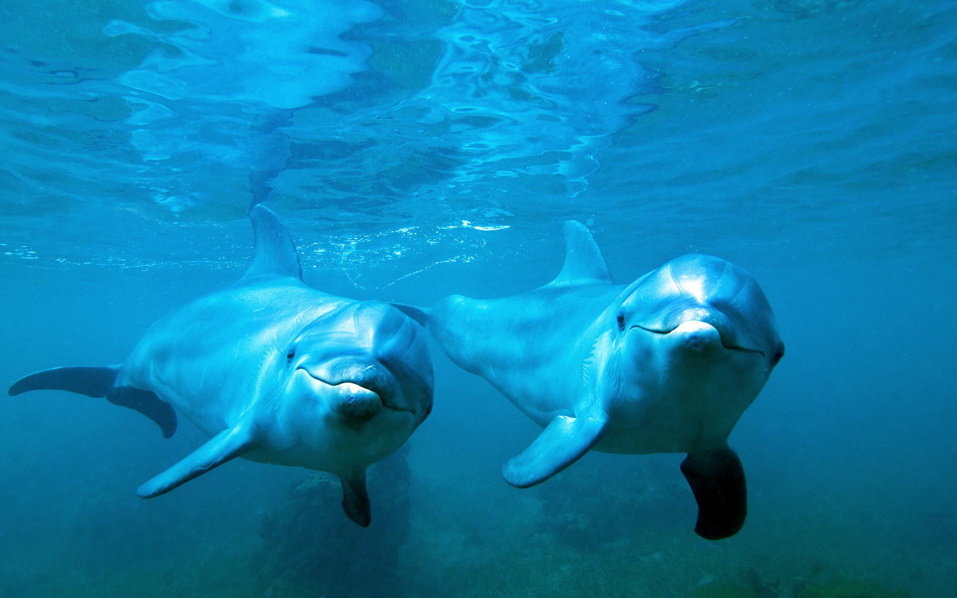 Свистящие языки помогут учёным создать модели дешифровки языка дельфинов