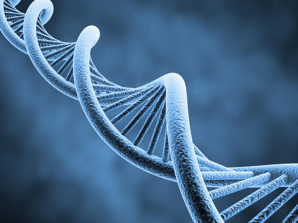 В ДНК млекопитающих обнаружены сотни древних вирусов