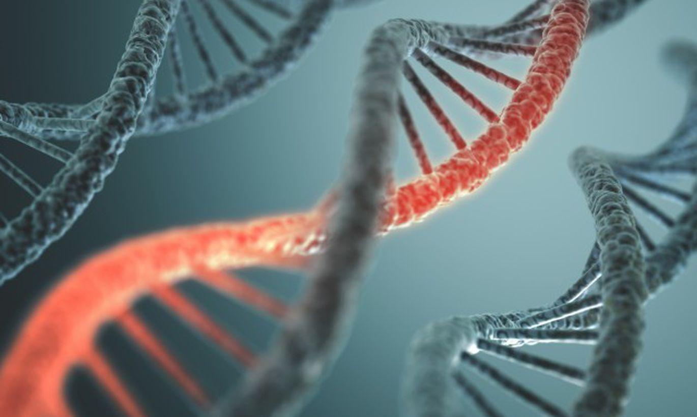 В ИЦиГ СО РАН создан комплексный метод диагностики генных мутаций