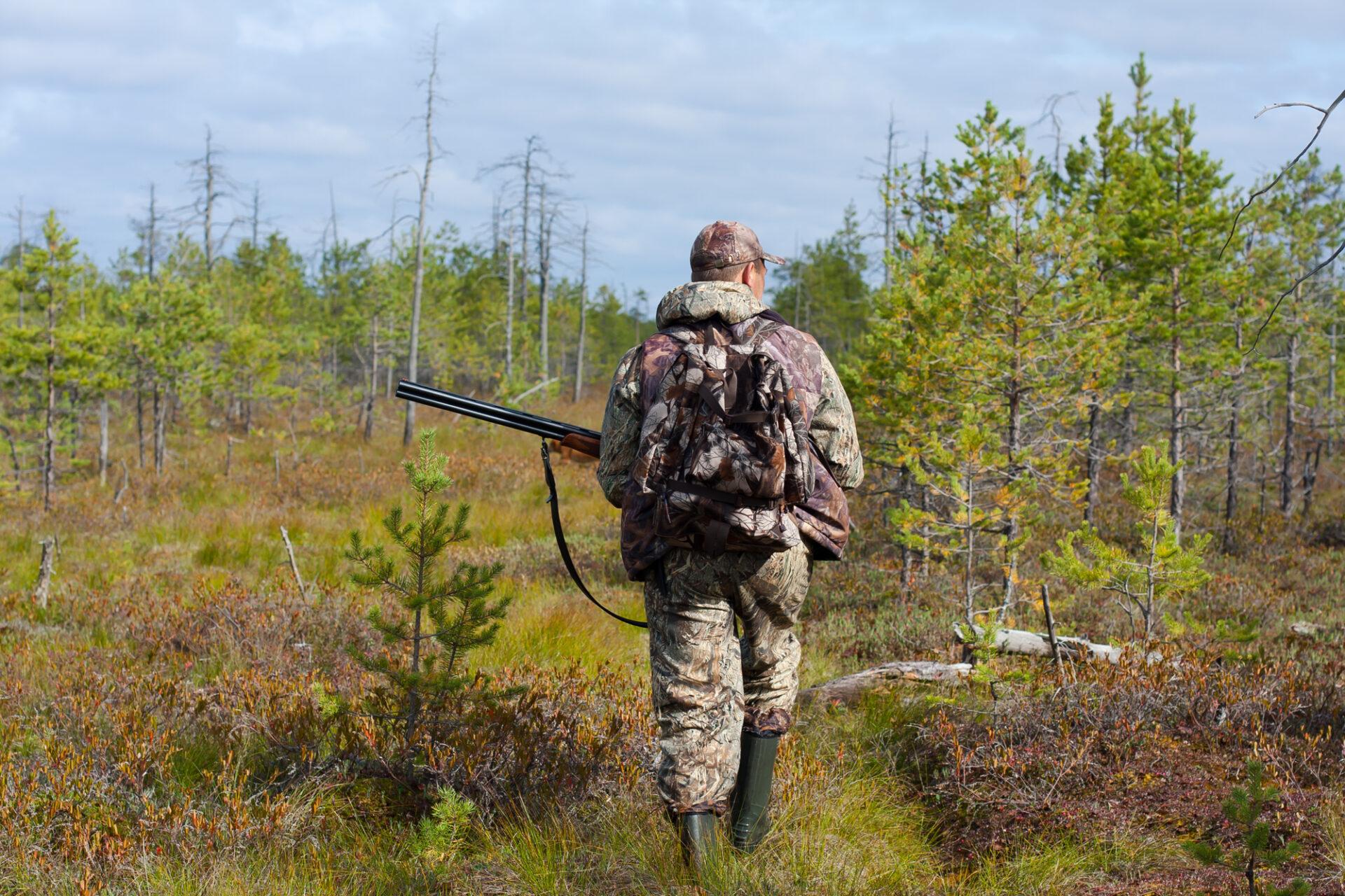 В Марий Эл после лесных пожаров возобновилась выдача разрешений на охоту