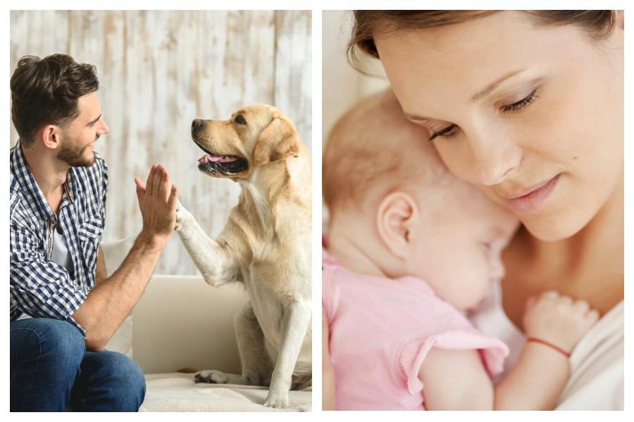 Установлена связь между собакой с хозяином и мамой с ребенком