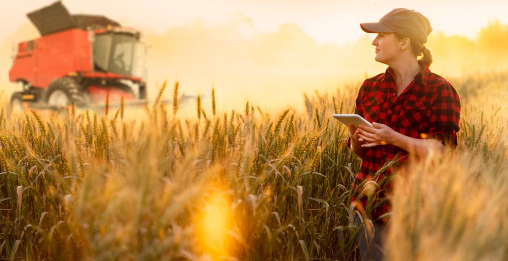 Прогноз урожая и покупка сельхозживотных в цифровом формате: «Сколково» подвело итоги акселератора Россельхозбанка