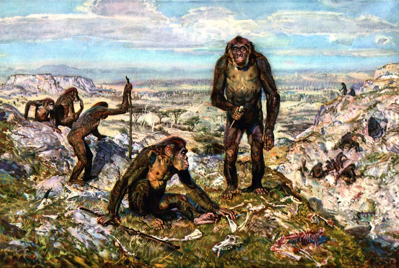 BioRxiv: Предки людей из-за генетической мутации лишились хвоста