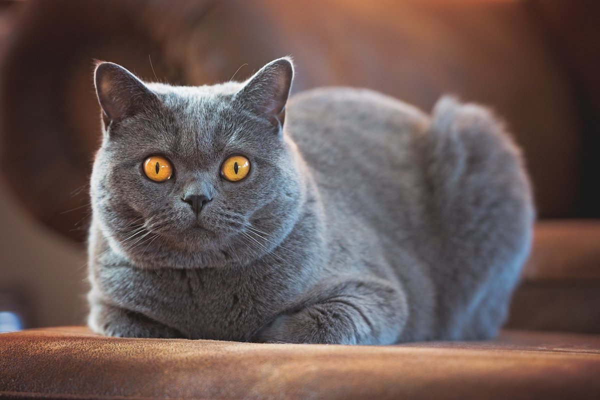 Названы семь ключевых качеств кошек