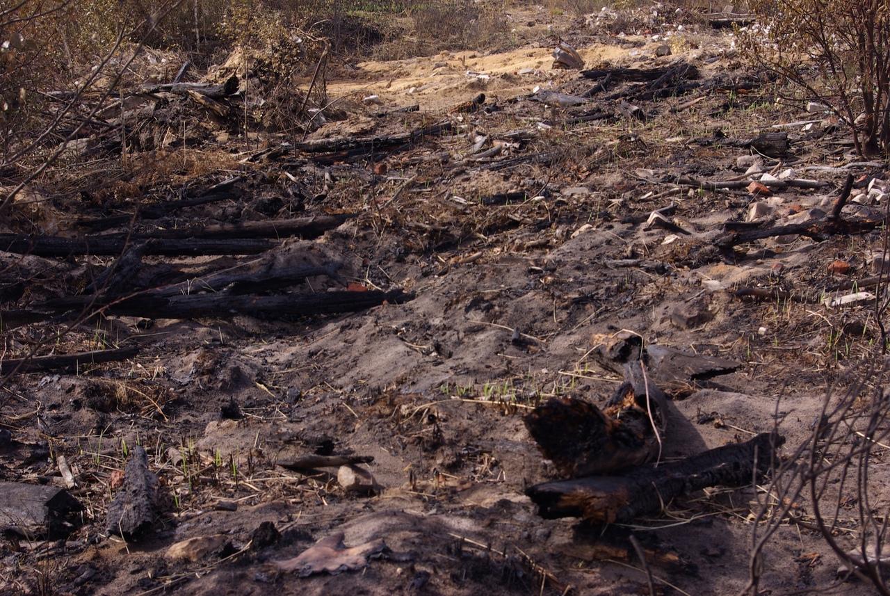 В Марий Эл продолжаются работы по проливке тлеющих очагов лесного пожара