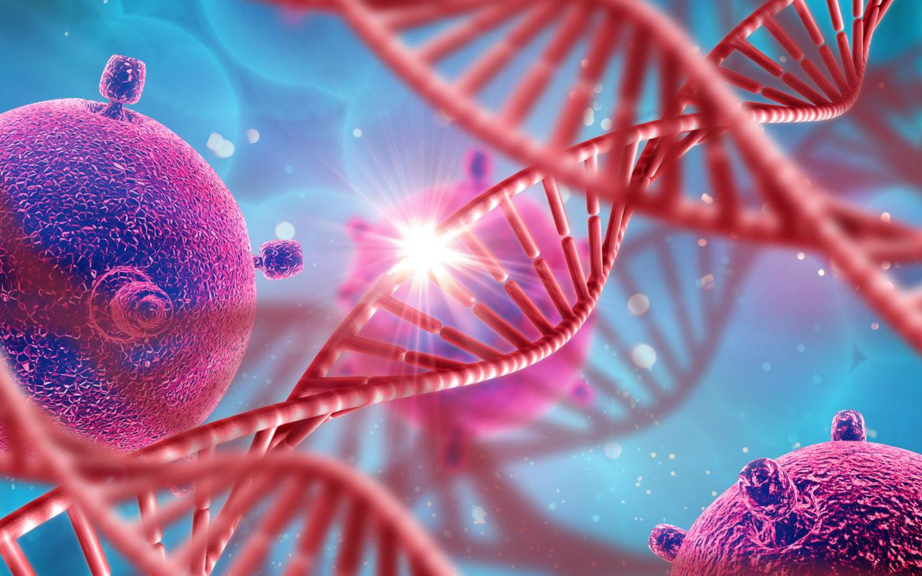 Репрограммированием клеток частично восстановлено сердце мышей после инфаркта