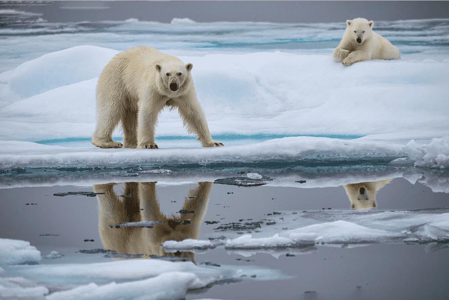 Глобальное потепление заставило животных увеличиться в размерах