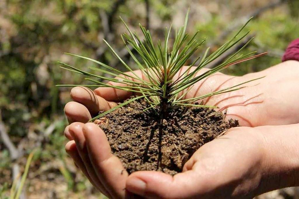 В Марий Эл приглашают добровольцев на посадку леса