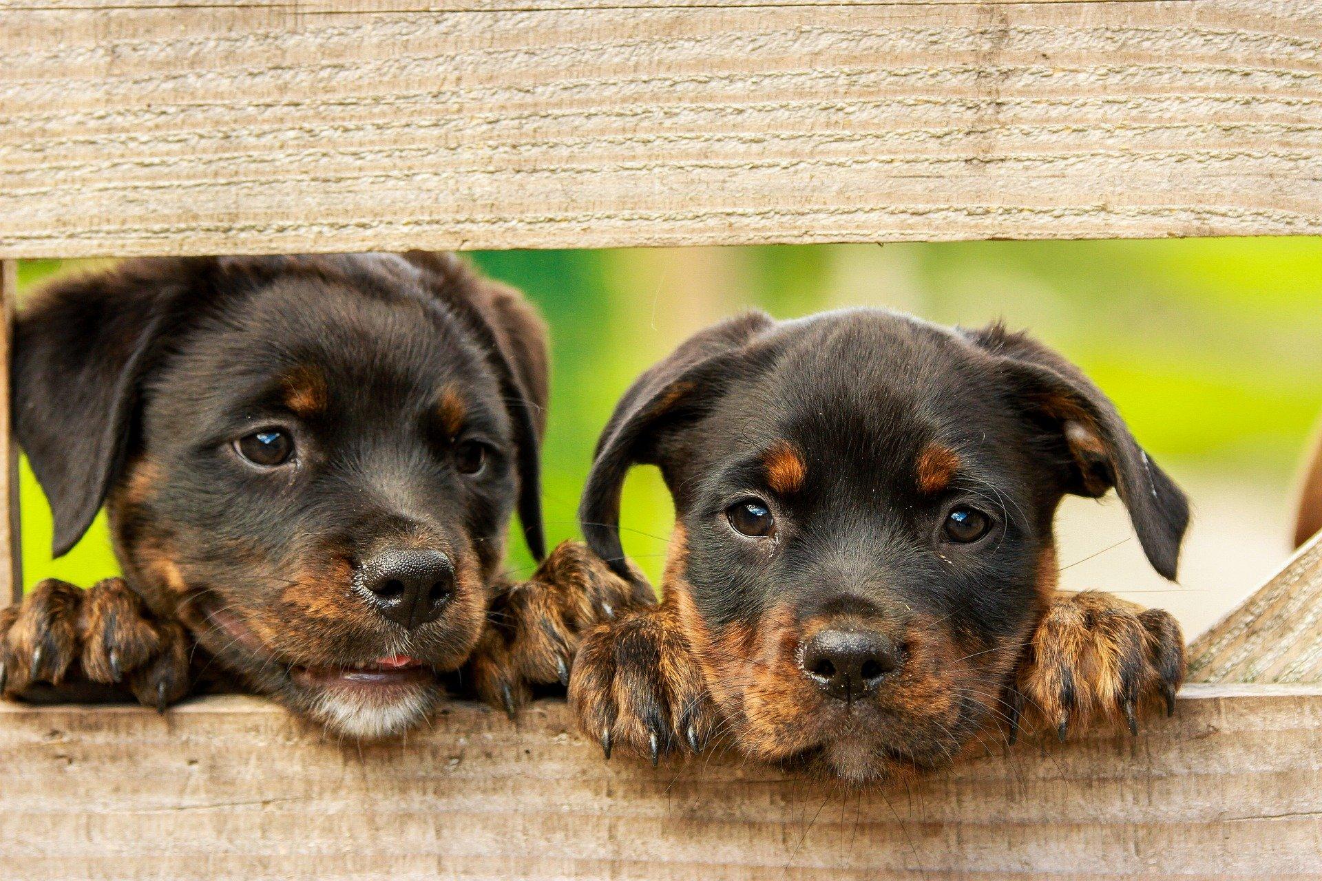 Собаки могут определять, являются ли преднамеренными действия человека