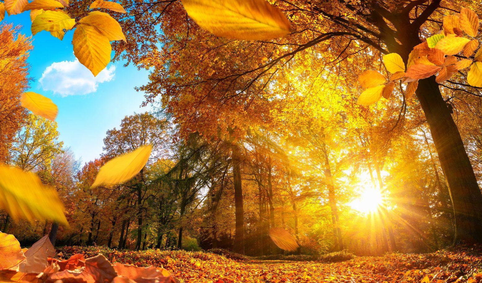 В день осеннего равноденствия россияне отметят два праздника