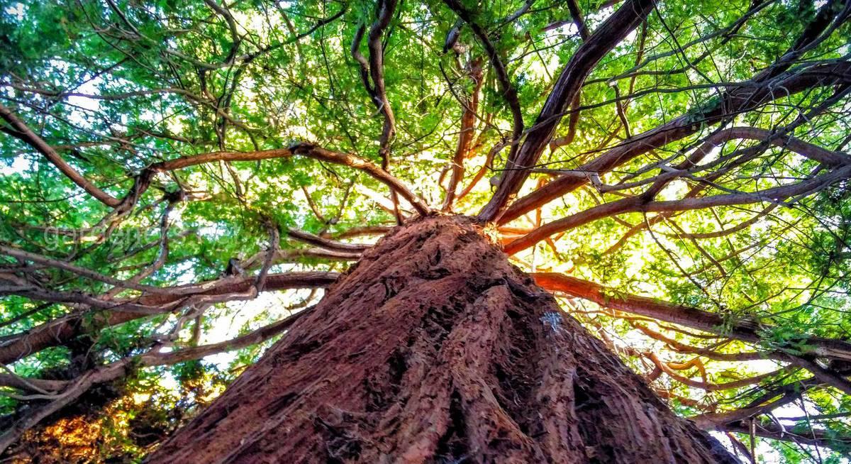 PLOS One: Первые примитивные деревья на Земле могли развиваться в более сухих условиях