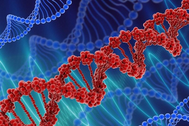 Названы гены, отвечающие на предрасположенность к тяжелой форме COVID-19