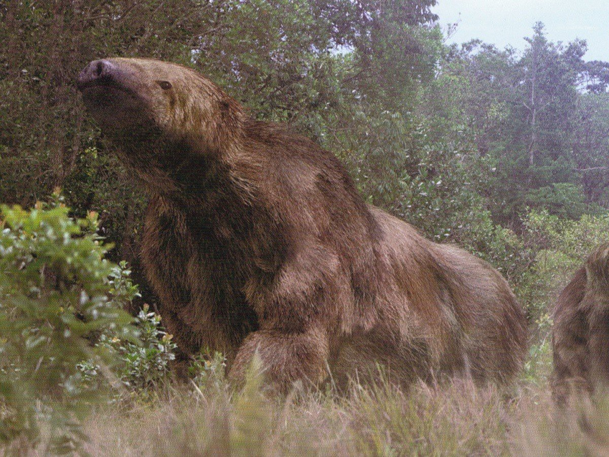 Ископаемые гигантские ленивцы рода Mylodon были всеядными