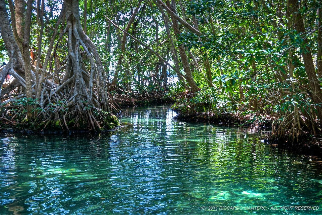 В лесу Юкатана в Мексике обнаружили мангровые заросли возрастом более 125 тысяч лет
