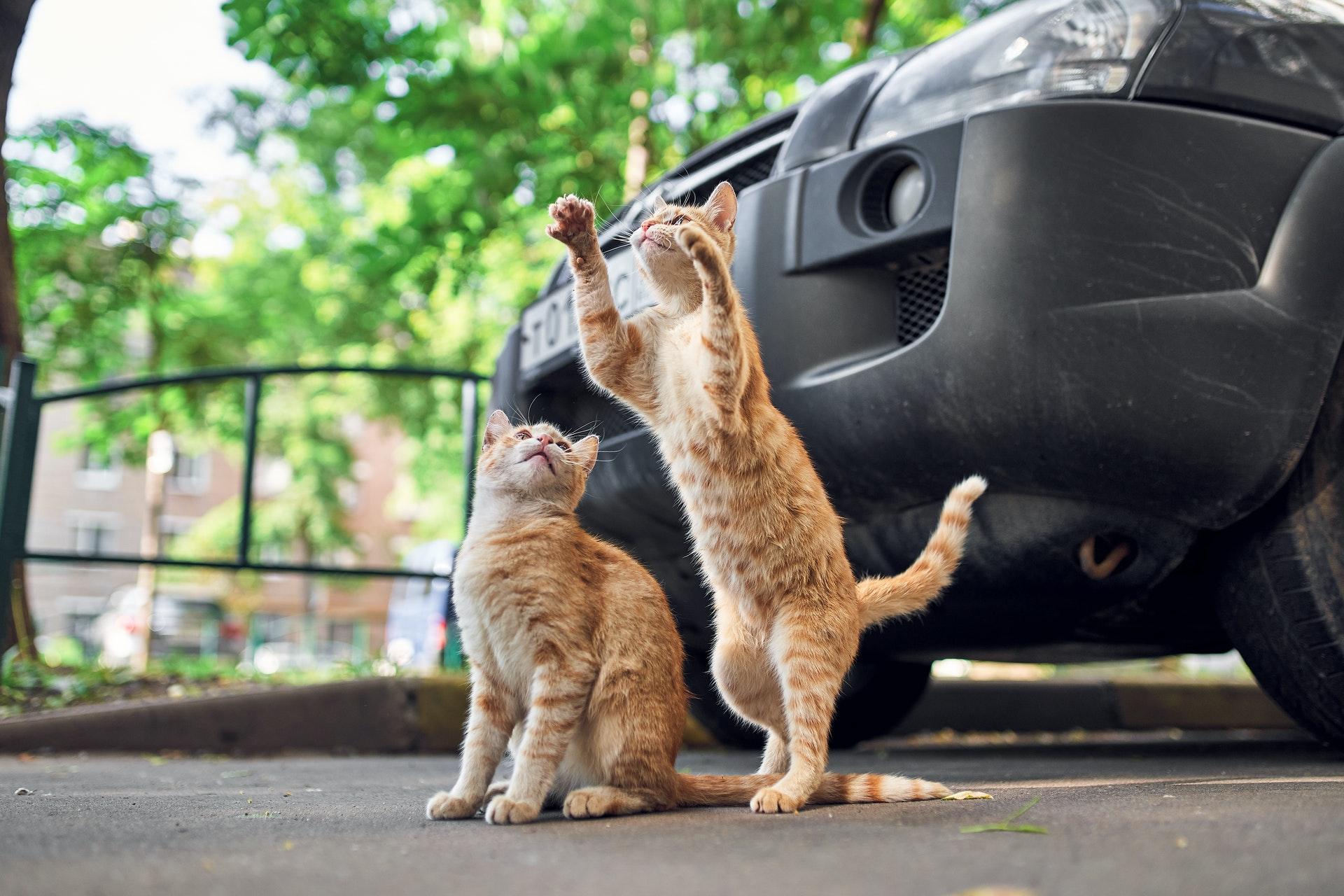 Ученые установили причину тяги домашних котов к охоте