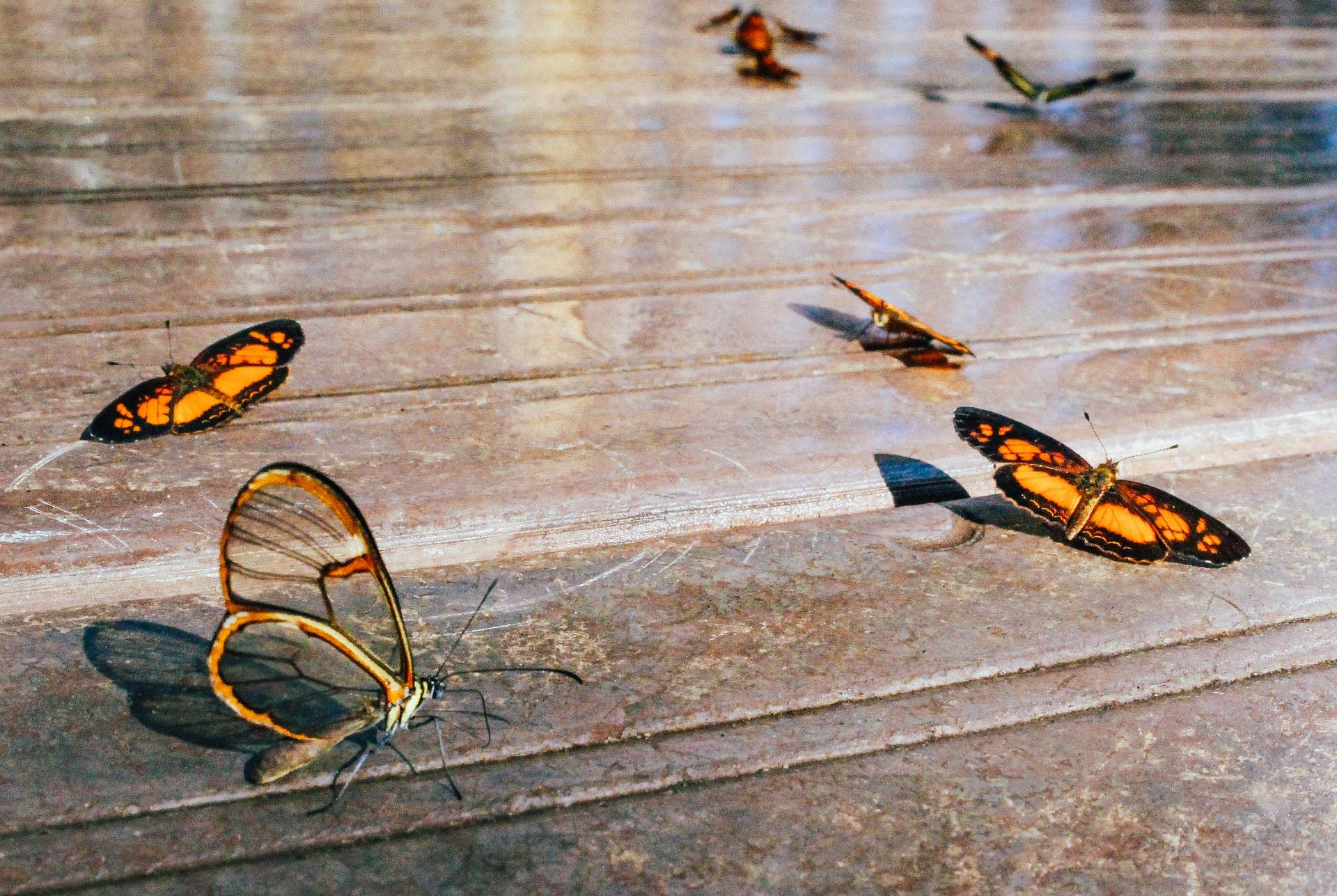 Норвежские ученые назвали схожими обоняние человека и насекомых